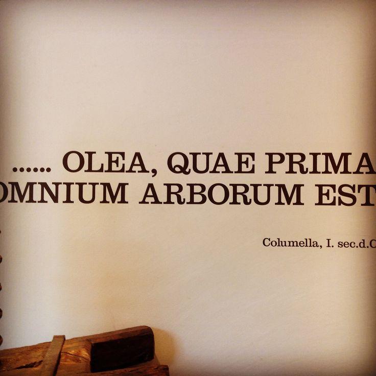 """""""Fra tutti gli alberi il primo posto spetta all'ulivo"""" Columella I sec. DC #olivewood #arteinolivo #madeinitaly #cuttingboard"""