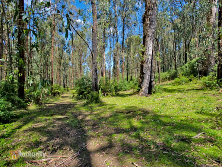 What a tranquil spot in this leafy part of Kinglake.