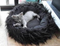 furry/fleece cat bedCat Men, Cat Beds, Animal Lovers, Kitty Cat, Dogs, Animal Treats, Pets Things, Furry Fleece Cat, Beds Awww