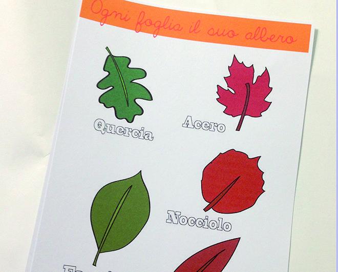 In questi giorni a scuola i nostri bambini stanno imparando le varie tipologie di foglie esistenti:ora affrontanoalla differenza tra caducifoglie e sempreverdi. Voi la conoscete?  Le Caducifoglie sono tutte quelle foglie che si staccano dagli alberi in autunno per permettere il ciclo vital
