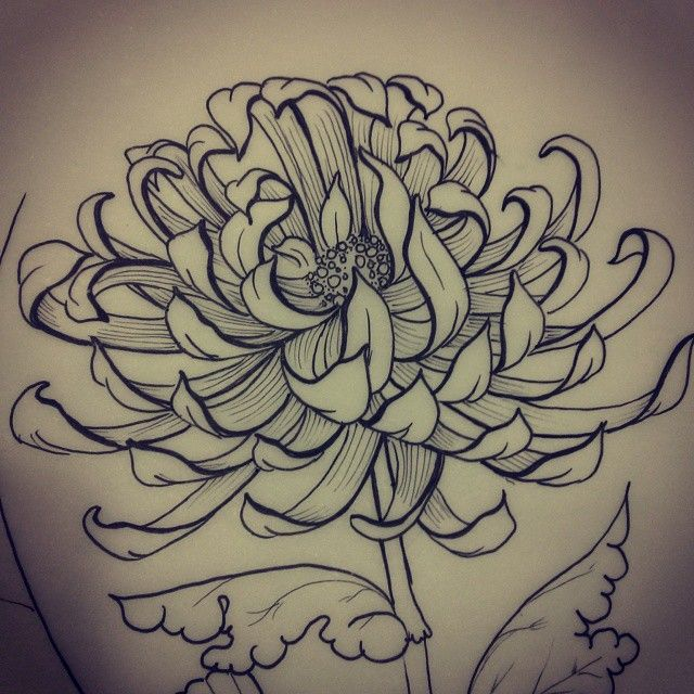 Chrysanthemum Flower Line Drawing : Best images about chinese drawings on pinterest