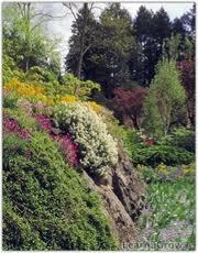 steep garden planting -