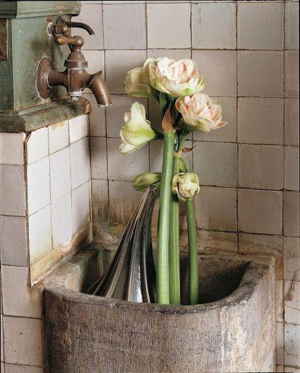 Have a nice day with this beautiful Amaryllis flowers #Amaryllis #Hippeastrum #royalcolors #Floral #Flower #Bloom #Beautiful #Amazing #bulbs #keukenhof #Netherlands #амариллис #アマリリス #孤挺花 #amarilis royalcolors.com #flowers