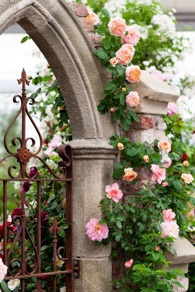 "Stunning English ""secret garden"" portal with David Austin climbing roses ~ (Katie Spicer Photography)"