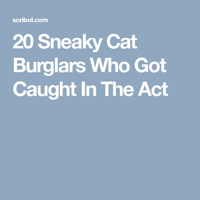 Best Sneaky Cat Ideas On Pinterest Cat Tags Cat Rehoming - Sneaky cat got caught