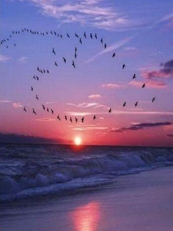 飛び立つ渡り鳥がつくったハート型の軌跡。 マジックアワーの夕景に、瞬間的にできた鳥たちによるハート型飛行。 見られた人はラッキーですね。