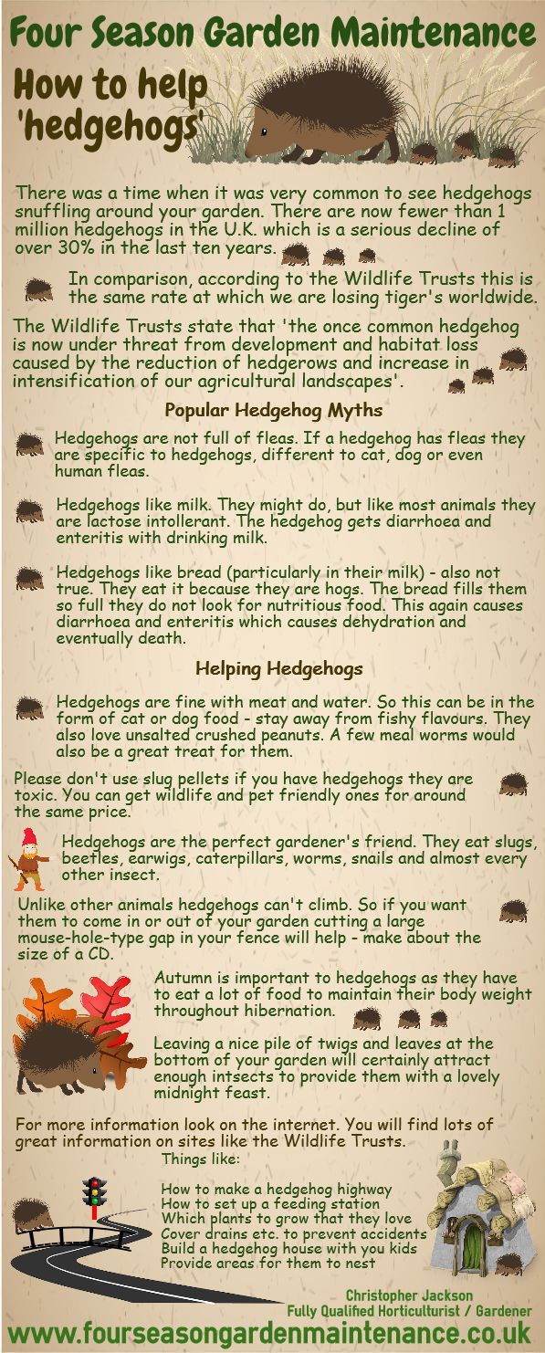 Thinking about hedgehogs!! Bradford Gardener - Christopher Jackson www.fourseasongardenmaintenance.co.uk