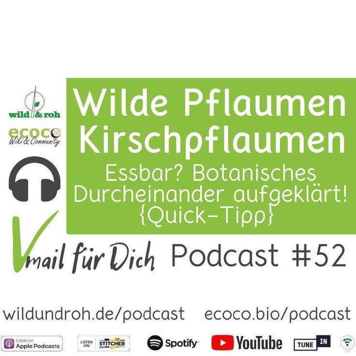 Wilde Pflaumen Und Kirschpflaumen Essbar Botanisches Durcheinander Aufgeklart Quick Tipp Podcast Folge 52 Ecoco Kirschpflaume Podcast Pflaume