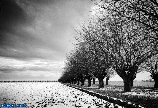 """""""Ebene mit Bäumen"""" aus dem Bildband """"View Frames"""" von Roberto Casavecchia."""