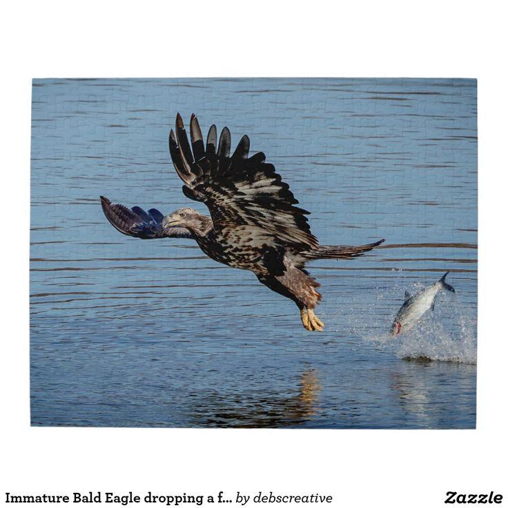 Immature Bald Eagle dropping a fish Jigsaw Puzzle