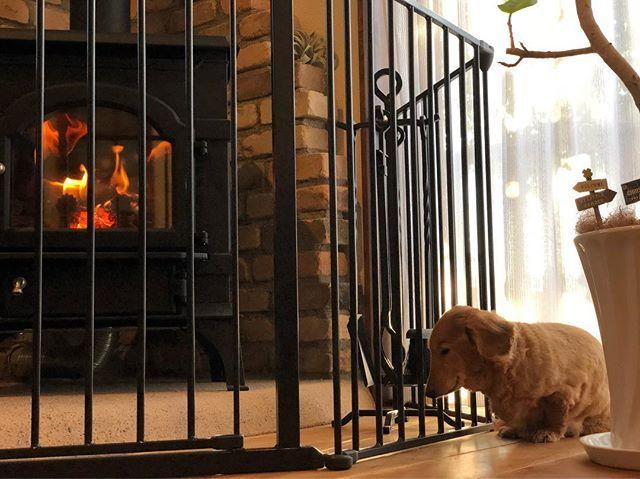 暖房の側にずっといるチョコ。 暑いのに😵 #犬 #愛犬 #ミニチュアダックス #暖炉 #暑い #狭山 #入間 #所沢 #ガレージハウス #インダストリアル #薪ストーブ #炎