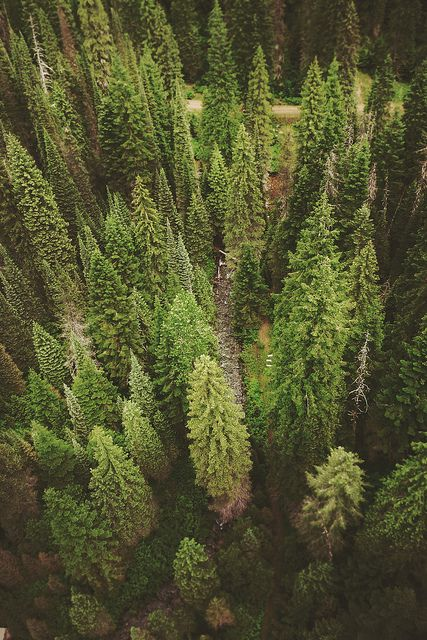 {<3} forest
