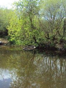 The River Barrow at Clashganny, Co. Carlow, Ireland