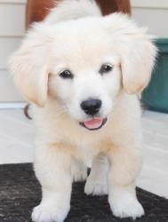 Vino Blanco: Animal Lovers, Pet Stuff, Cutest Puppy Ever, Joy Joy, Puppies 3, Cutest Puppies Ever, Happy Happy, Wuv Animal, Happy Joy