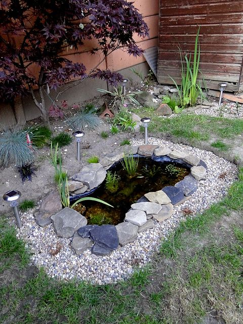 12 best images about tadpoles frogs ponds on pinterest for Fish pond cover ideas
