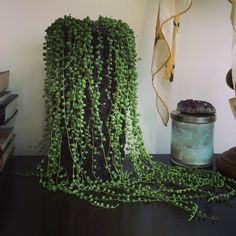 Indoor House Vine Plants   Google Search