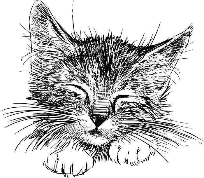 Wandaufkleber Katze Schlaft Pixers Wir Leben Um Uns Zu