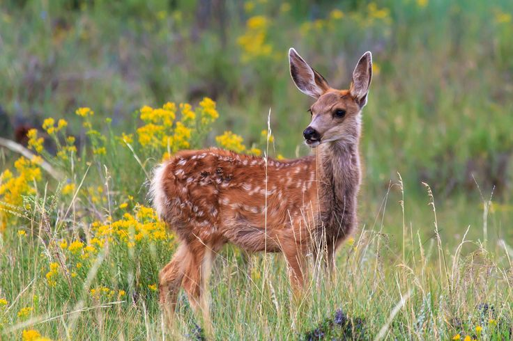 Hunting - Texas Parks & Wildlife Department |Wide Deer Wildlife