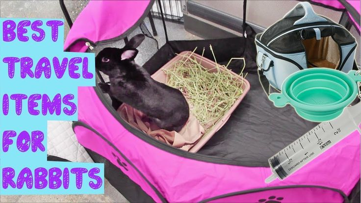 Best Travel Items For Rabbits! Travel items, Travel, Best
