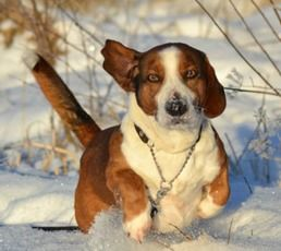 Pyometra in Dogs - A Potentially Deadly Uterus Infection