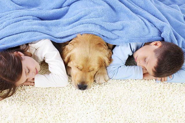 Nincs is szívmelengetőbb érzés, mint 3 ilyen csöppséget a takaró alatt, a kényelmes padlószőnyegen pihenni látni. 😊 🐶 💖 Mi a részünkről 20%-os padlószőnyeg kedvezménnyel járulunk hozzá ehhez az idilli képhez. 😉 #gyerekek #kids #kutya #dog #padlószőnyeg #carpet #akció #kedvezmény #drpadlo
