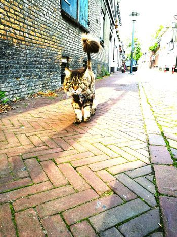 Cobblestone Day Animal Themes History One Animal Outdoors Building Exterior Cat Streetphotography Pet Portraits
