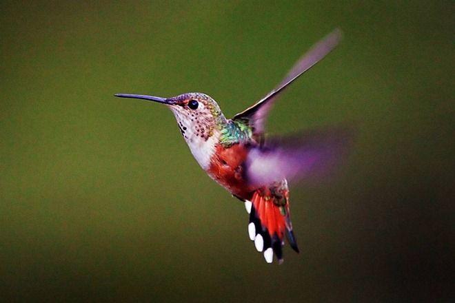 i love humming birds <3