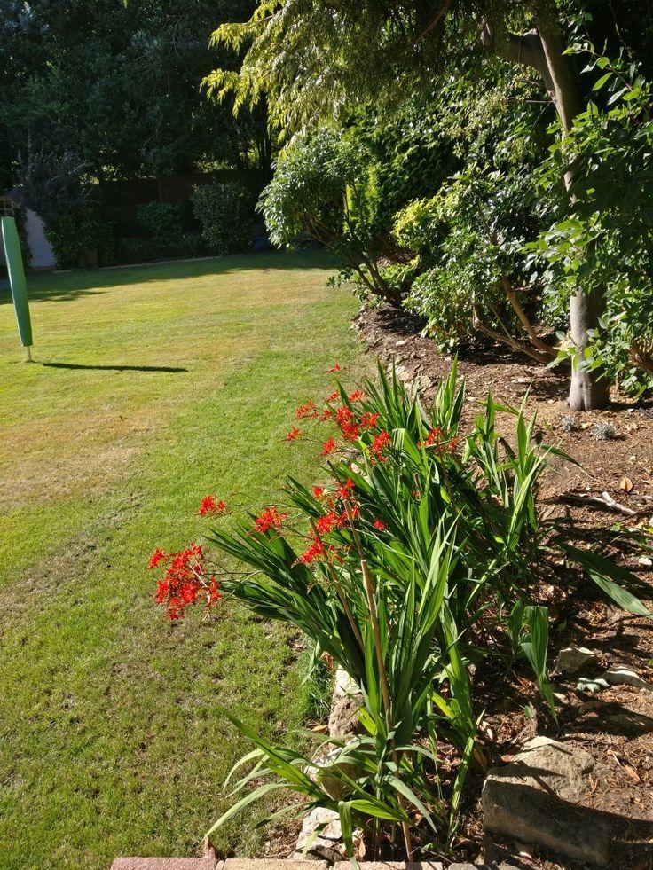 Back garden June 2017