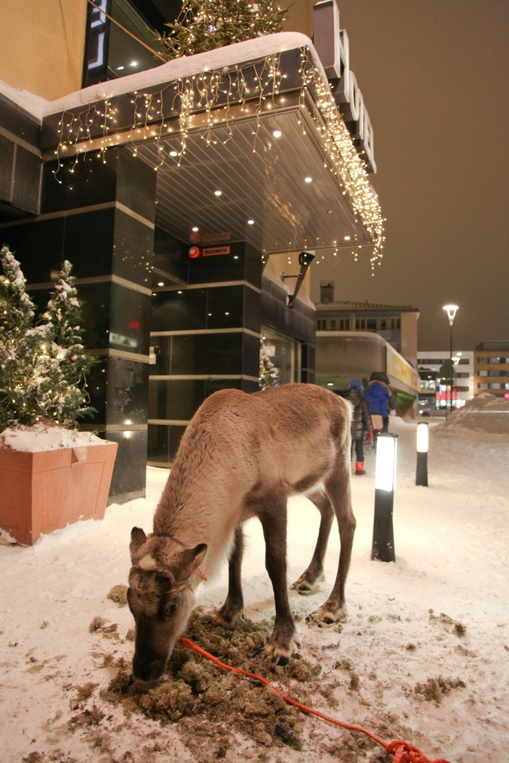 You can park your reindeer in front of the bar while having a beer on your reindeer ride in Rovaniemi, capital of Finnish Lapland :)