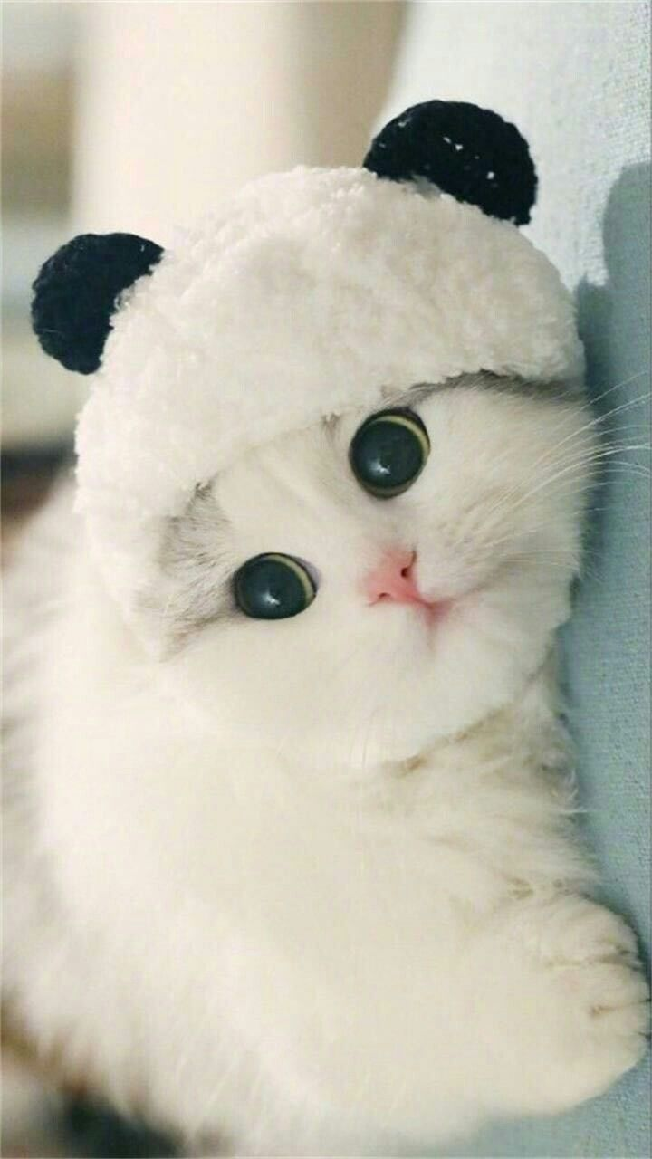 Follow The Joker At Jiya For More I Ll Follow U Back Kittens Cutest Pretty Cats Cute Baby Cats