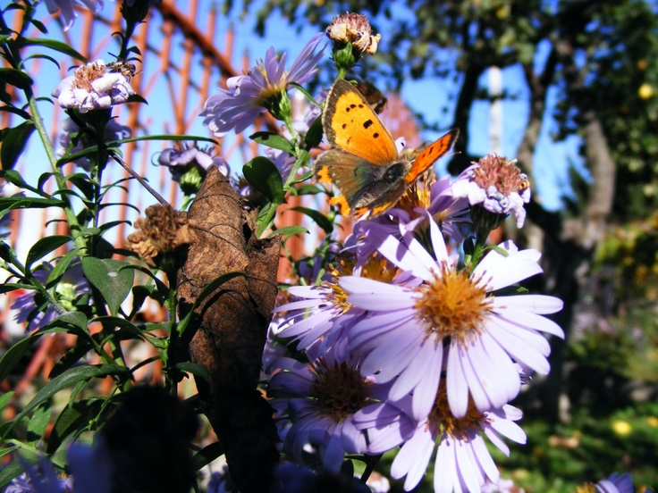 Flowers and Butterfly - Public Domain Photos, Free Images for Commercial Use