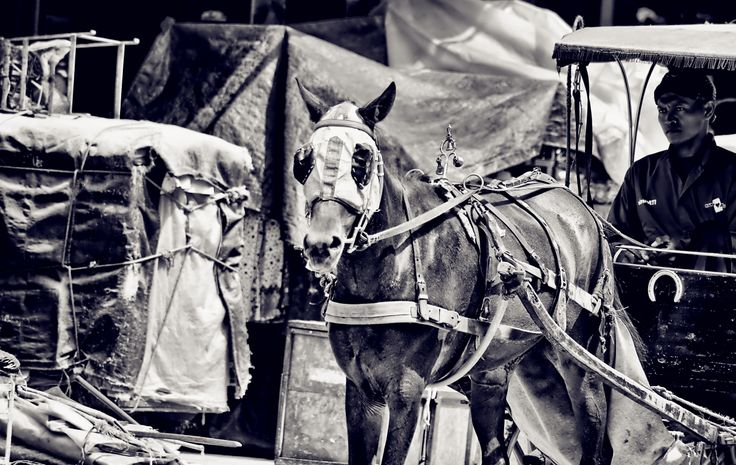 Delman is a traditional  transportation vehicle with two, three or four wheels that do not use the machine but used horses instead.. It's still can be found in Yogyakarta, Indonesia.