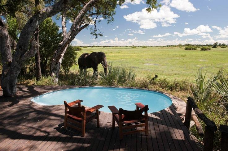 Legendary Mombo Camp, Okavango Delta, Botswana