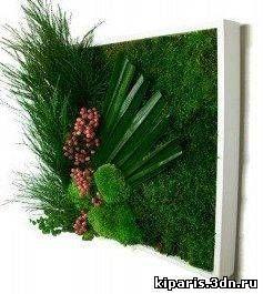 Живые зелёные картины и зелёные стены из стабилизированных растений в…