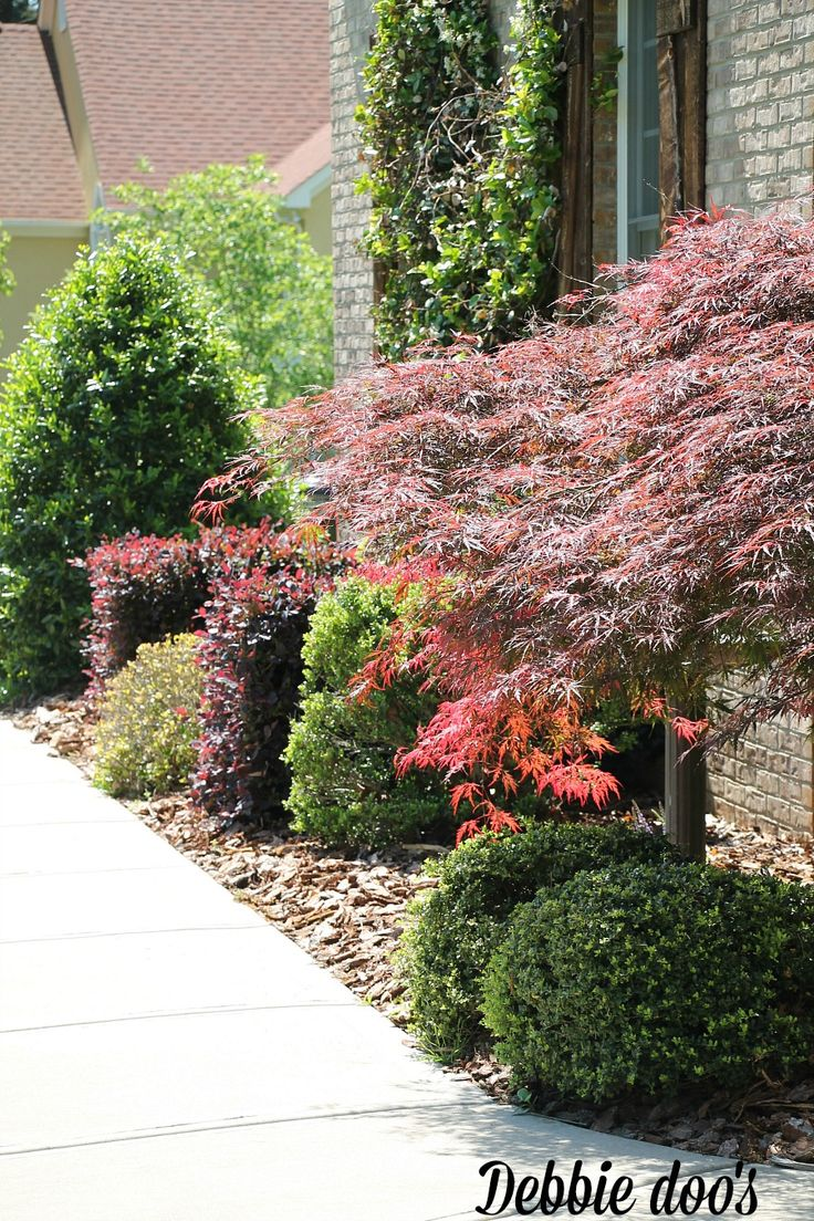 17 best ideas about low maintenance garden on pinterest low maintenance plants low. Black Bedroom Furniture Sets. Home Design Ideas