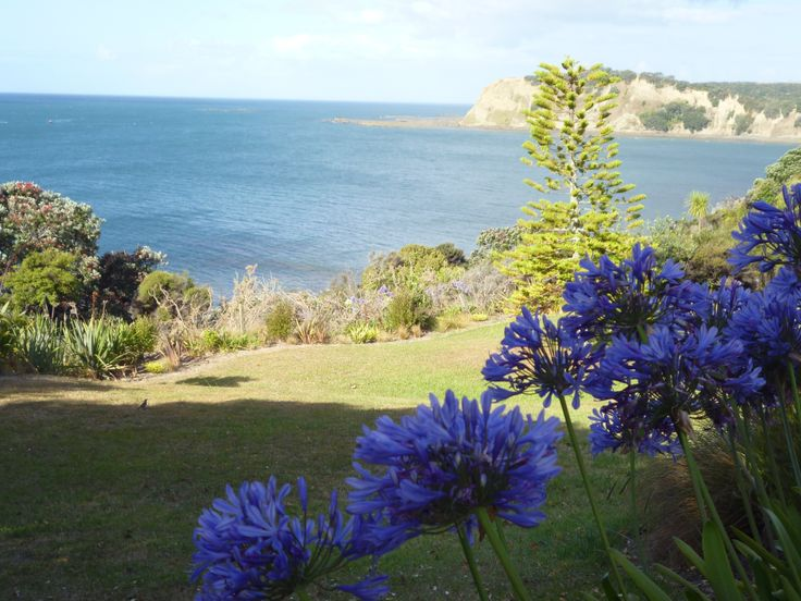 Agapanthus ~ Army Bay