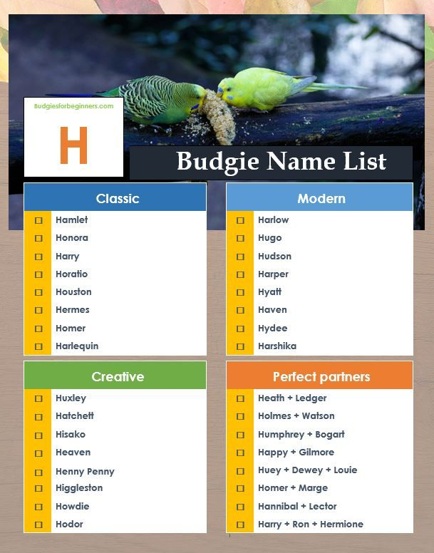 Budgie Names Beginning With H Budgie Names Budgies Unique Animals