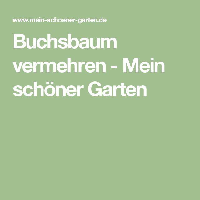 Buchsbaum vermehren - Mein schöner Garten