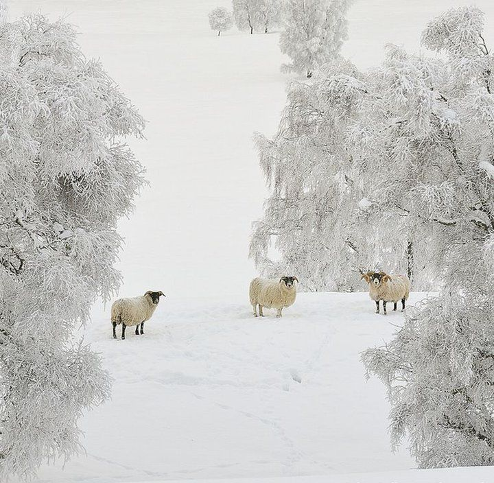 winter: Winter Snow, Winter Pictures, Winter Scene, Company Picnics, Summer Picnics, Amazing Natural, Country Girls, Counted Sheep, Winter Wonderland