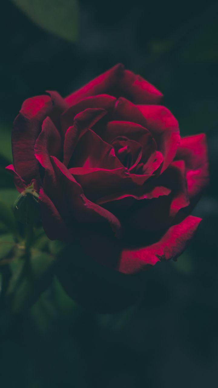 Pin Di Mihaela Becheva Su Flower Sfondi Floreali Sfondi Rosa Sfondi