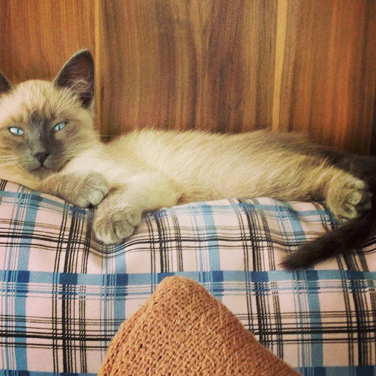 Cat, gato, lindo!