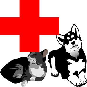 compare pet insurance Pet Insurance #spencerlodge