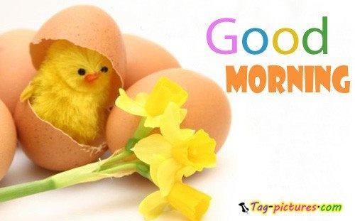 Good Morning Sunday Chicken : Good morning friends pinterest