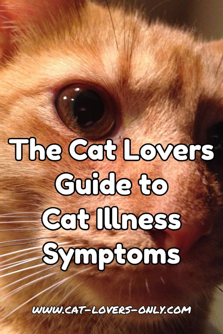 Cat Illness Symptoms A Guide For Cat Lovers With Images Cat Illnesses Cat Diseases Cat Health Problems