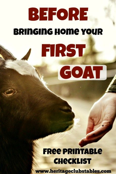Before bringing home your first goat. As your goats get settled, you will compile this list and more to keep your goats happy and healthy!