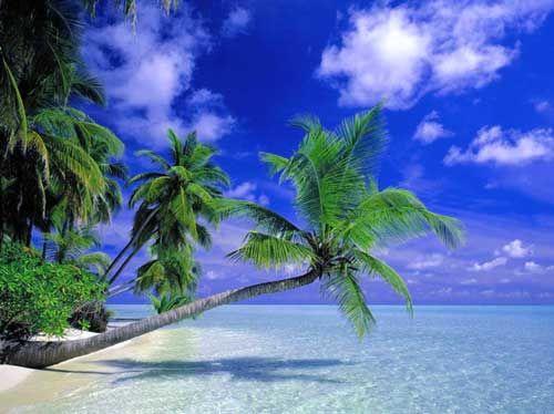 Pantai Bungalow Mobil akomodasi: Sangat Anda sendiri Musim Panas Pribadi bulan tujuan liburan  ...