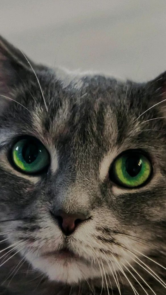 Pretty green eyes #cats