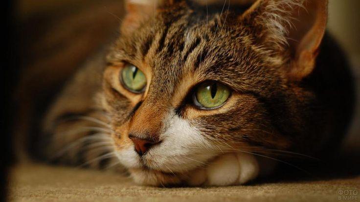 Фото красивых кошек в 2020 г | Смешные фото кошек, Смешное ...