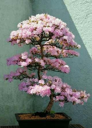 10 ideas sobre rboles enanos en pinterest arbustos de for Arboles de flores para jardin