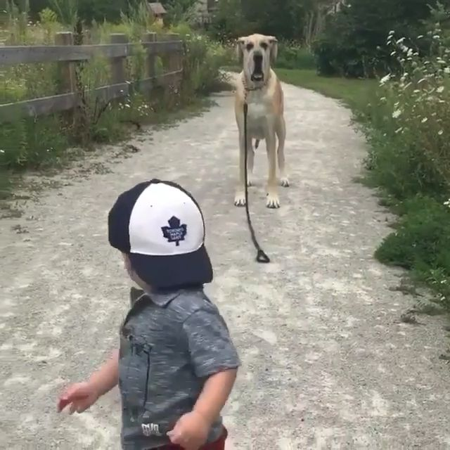 Cute Baby & His Dog ♥️❤️